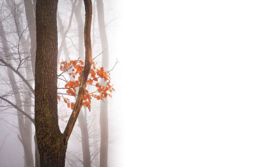 El antídoto del cotilleo: hablar clarito, con amabilidad y auto-responsabilidad
