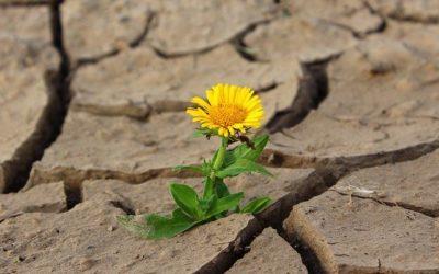 Resiliencia para trascender lo doloroso
